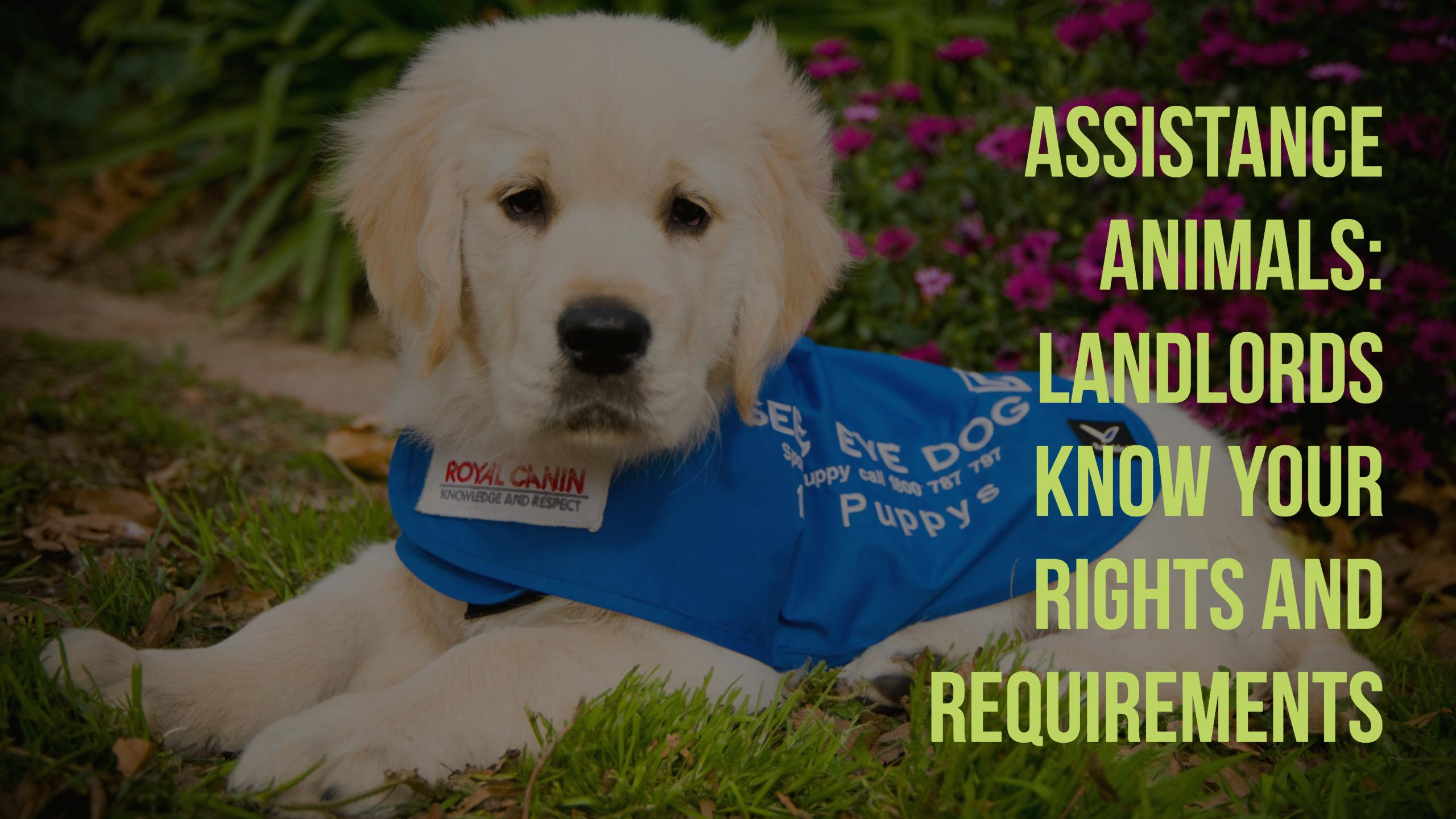 assistance-animals
